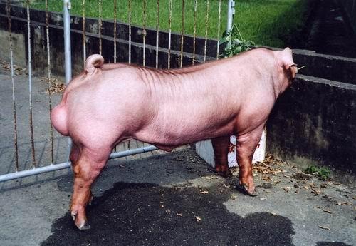 中央畜產會200411期D0846-02拍賣照片