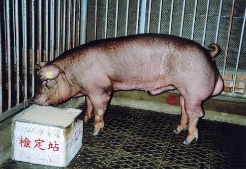 中央畜產會200411期D1766-14拍賣照片