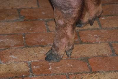 中央畜產會200501期D0505-10體型-四肢相片