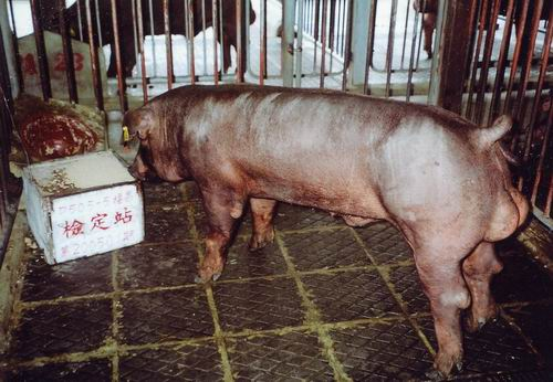 中央畜產會200501期D0505-05拍賣照片