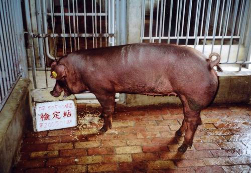 中央畜產會200501期D0505-10拍賣照片