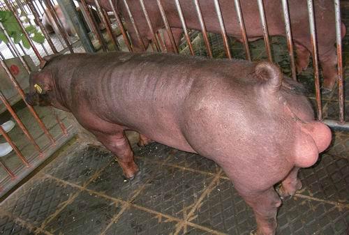 中央畜產會200501期D0507-03拍賣照片
