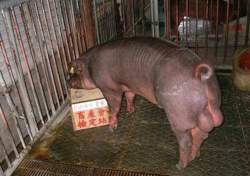 中央畜產會200503期D0412-01拍賣照片