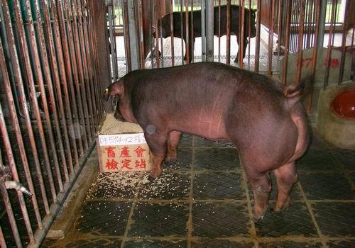 中央畜產會200503期D0574-12拍賣照片