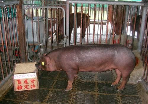 中央畜產會200503期D0770-03拍賣照片