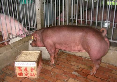 中央畜產會200503期D0950-04拍賣照片