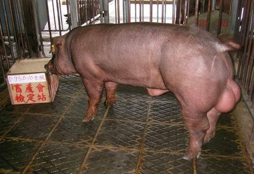 中央畜產會200503期D0950-10拍賣照片