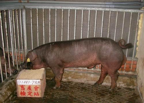 中央畜產會200503期D1481-09拍賣照片