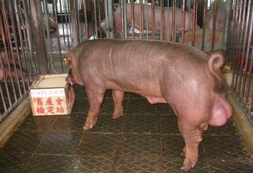 中央畜產會200503期D1485-10拍賣照片
