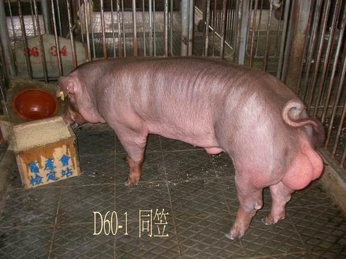 中央畜產會200504期D0060-01拍賣照片