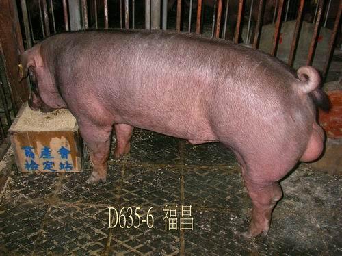 中央畜產會200504期D0635-06拍賣照片