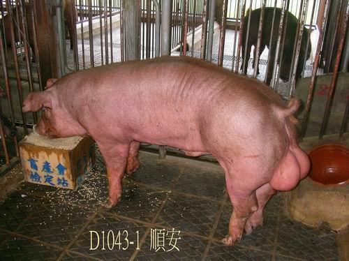 中央畜產會200504期D1043-01拍賣照片
