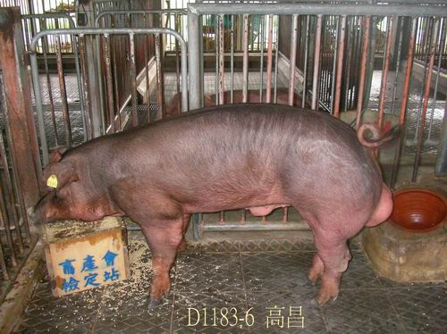 中央畜產會200504期D1183-06拍賣照片