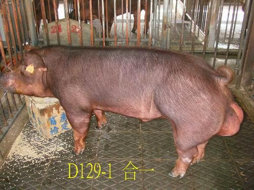 中央畜產會200505期D0129-01拍賣照片