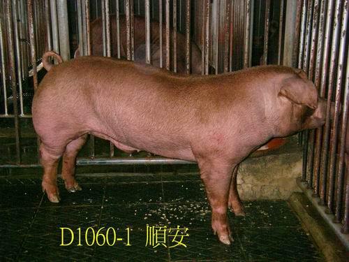 中央畜產會200505期D1060-01拍賣照片