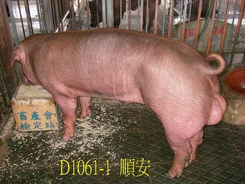 中央畜產會200505期D1061-01拍賣照片
