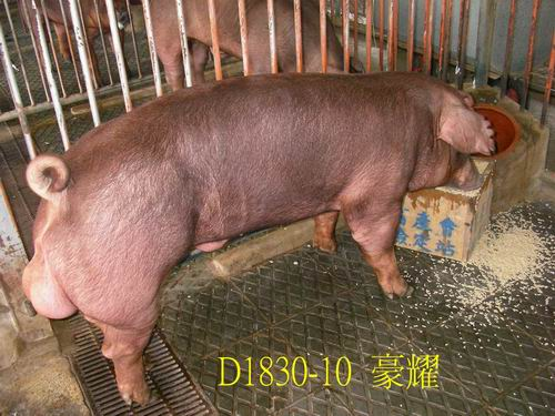 中央畜產會200505期D1830-10拍賣照片