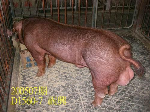 中央畜產會200507期D1560-07拍賣相片