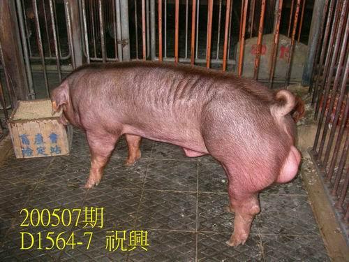中央畜產會200507期D1564-07拍賣相片
