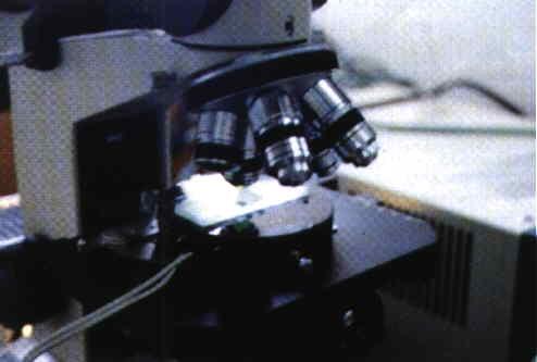 羊採精所需器材 - 精液檢查、稀釋、保存所需器材(2)