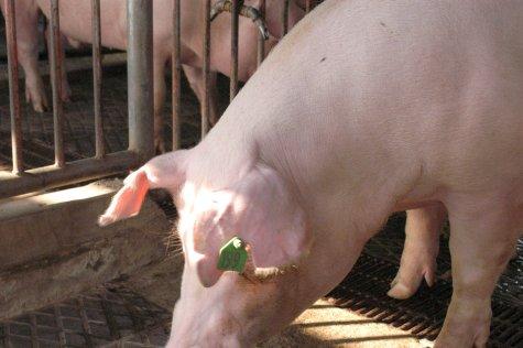 中央畜產會200307期L0541-09體型-頭頸相片