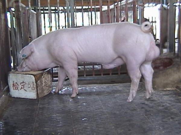 中央畜產會200005期L0775-11拍賣照片