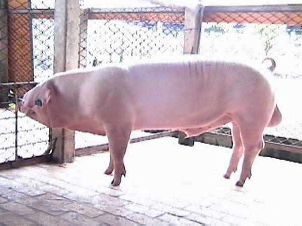 中央畜產會200005期L1863-08拍賣照片