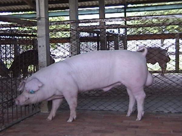 中央畜產會200005期L1863-11拍賣照片