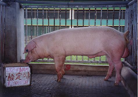 中央畜產會200007期L0072-04拍賣照片