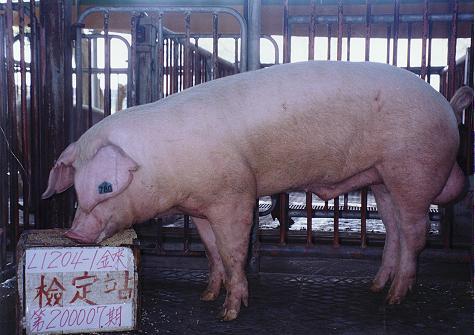 中央畜產會200007期L1204-01拍賣照片