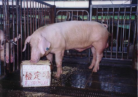 中央畜產會200007期L1204-03拍賣照片