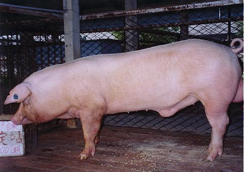 中央畜產會200007期L1891-09拍賣照片