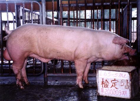 中央畜產會200009期L0065-05拍賣照片