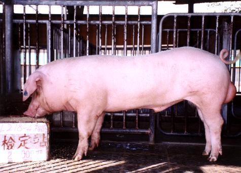 中央畜產會200009期L0218-04拍賣照片