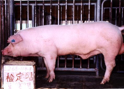 中央畜產會200009期L0268-11拍賣照片
