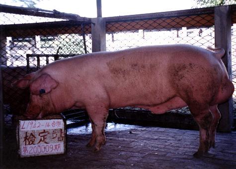 中央畜產會200009期L1942-14拍賣照片