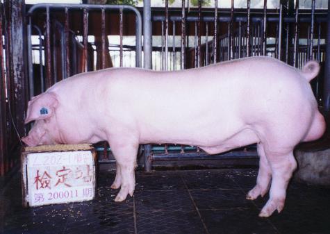 中央畜產會200011期L0202-01拍賣照片