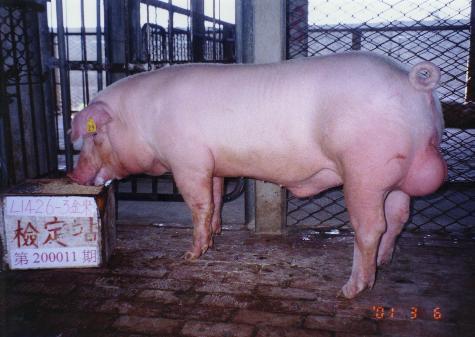 中央畜產會200011期L1426-03拍賣照片