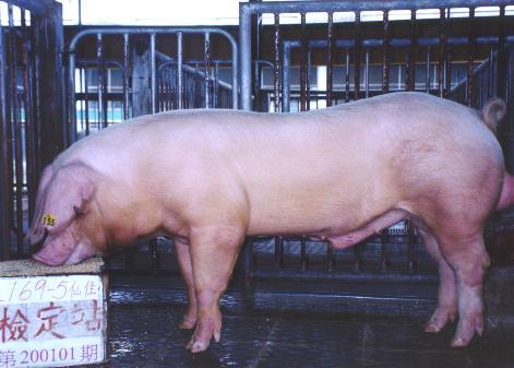中央畜產會200101期L0169-05拍賣照片