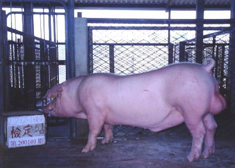 中央畜產會200101期L0212-01拍賣照片