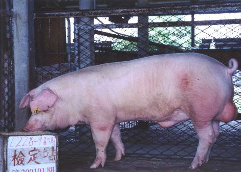 中央畜產會200101期L0228-09拍賣照片