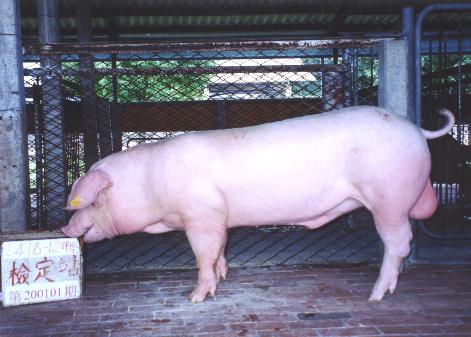中央畜產會200101期L0418-12拍賣照片