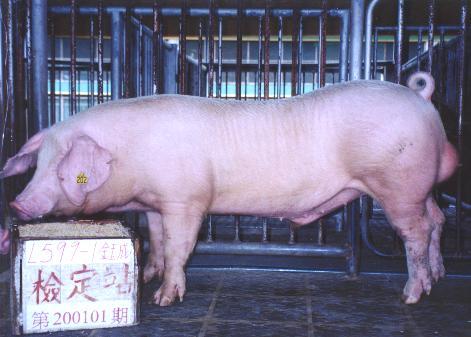 中央畜產會200101期L0599-01拍賣照片