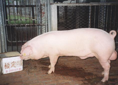 中央畜產會200103期L0236-04拍賣照片