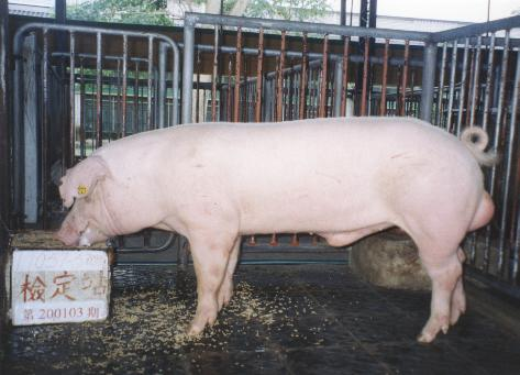 中央畜產會200103期L1057-05拍賣照片