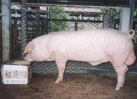 中央畜產會200103期L1057-08拍賣照片