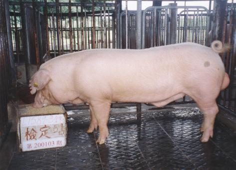 中央畜產會200103期L1589-03拍賣照片