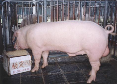 中央畜產會200103期L1624-02拍賣照片
