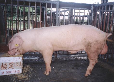 中央畜產會200103期L1624-03拍賣照片