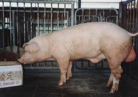 中央畜產會200105期L0113-11拍賣照片